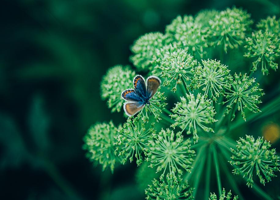 Hållbara upplevelser och ekoäventyr